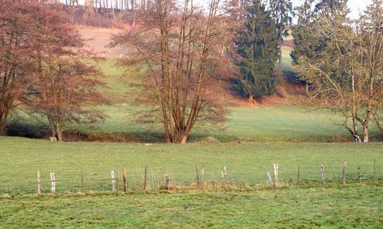 photos-terrains-4